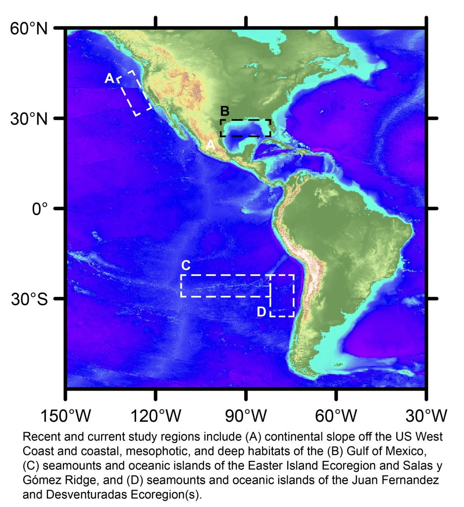 Image of the Americas indicating the recent and current study regions, which include (A) continental slope off the US West Coast and coastal, mesophotic, and deep habitats of the (B) Gulf of Mexico, (C) seamounts and oceanic islands of the Easter Island Ecoregion and Salas y  Gómez Ridge, and (D) seamounts and oceanic islands of the Juan Fernandez and Desventuradas Ecoregion(s).